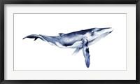 Whale Portrait I Framed Print