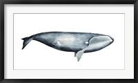 Whale Portrait III Framed Print