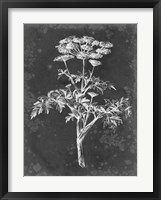 Slate Floral II Framed Print