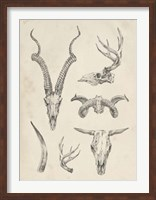Framed Skull & Antler Study I