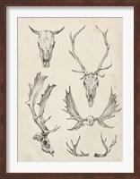 Framed Skull & Antler Study II
