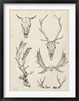 Skull & Antler Study II Framed Print
