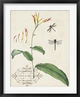 Canna & Dragonflies I Framed Print