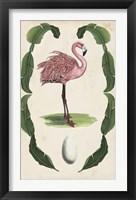 Antiquarian Menagerie - Flamingo I Framed Print