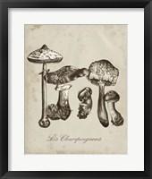 Framed Les Champignons II