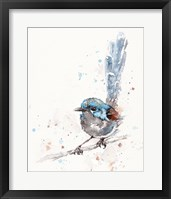 Framed Mischief in the Making (Variegated Fairy Wren)