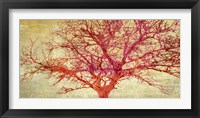 Coral Tree Framed Print