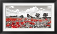 Framed Poppies and Vicias in Meadow, Mecklenburg Lake District, Germany