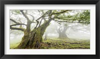 Framed Laurel Forest in Fog, Madeira, Portugal