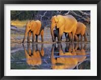 Framed African Elephants, Okavango, Botswana