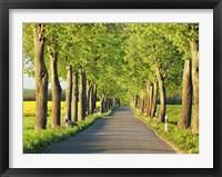 Framed Lime Tree Alley, Mecklenburg Lake District, Germany 1