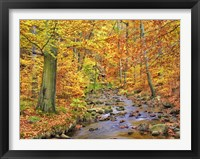 Framed Beech Forest In Autumn, Ilse Valley, Germany