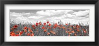 Framed Poppies In Corn Field, Bavaria, Germany