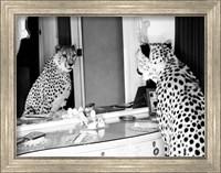Framed Cheetah Looking in Mirror
