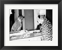 Framed Cheetah Looking in Mirror