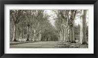 Framed Tree Lined Road, Norfolk, UK