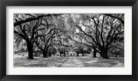 Framed Avenue of Oaks, South Carolina