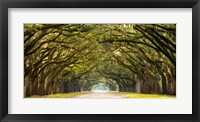 Framed Path Lined with Oak Trees