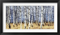 Framed Birch Grove in Autumn