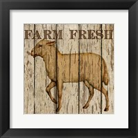 Farm Fresh Lamb Framed Print
