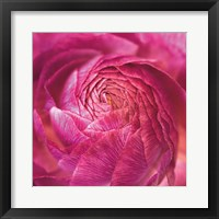 Framed Ranunculus Abstract II Color