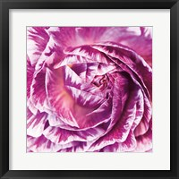 Framed Ranunculus Abstract IV Color