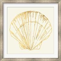 Framed Coastal Breeze Shell Sketches V