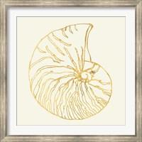 Framed Coastal Breeze Shell Sketches VII