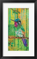 Purple-throated Mountain Gem Framed Print