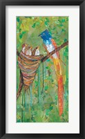 Framed Asian Paradise Flycatcher