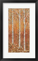 Birch Tryptic I Framed Print