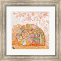 Framed Spiral Seashell