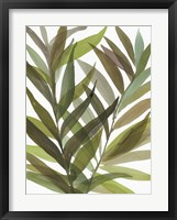 Framed Tropical Greens I