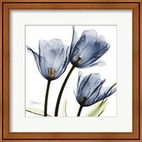 Framed New Blue Tulips C54