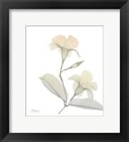 Sunday Morning Mandelilla Framed Print