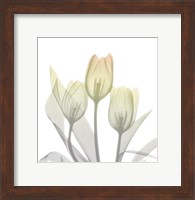 Framed Sunday Morning Tulips Two