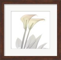 Framed Sunday Morning Calla Lily