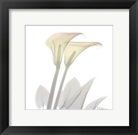 Sunday Morning Calla Lily Framed Print