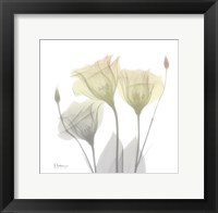 Sunday Morning Gentian Framed Print
