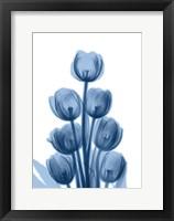 Framed Indigo Spring Tulips