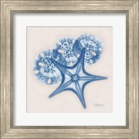 Framed Cerulean Starfish and Sand Dollar