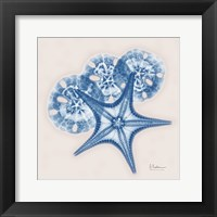 Cerulean Starfish and Sand Dollar Framed Print
