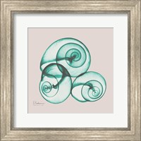 Framed Shamrock Sky Snails