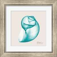 Framed Viridian Water Snail