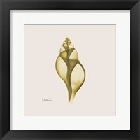 Genie Tulip Shell Framed Print