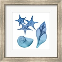 Framed Blue Ombre Sea Life