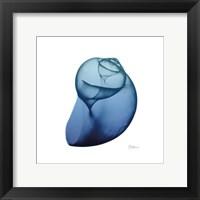 Framed Scenic Water Snail 4