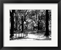Framed Central Park Walk