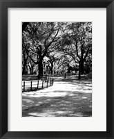 Central Park Walk 2 Framed Print