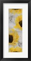 Butterfly Bloom Framed Print